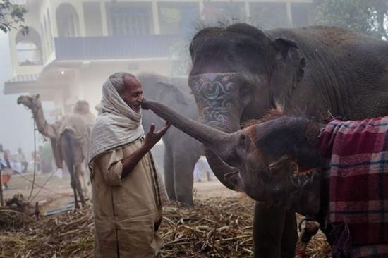 老人の鼻を鼻で触るゾウ