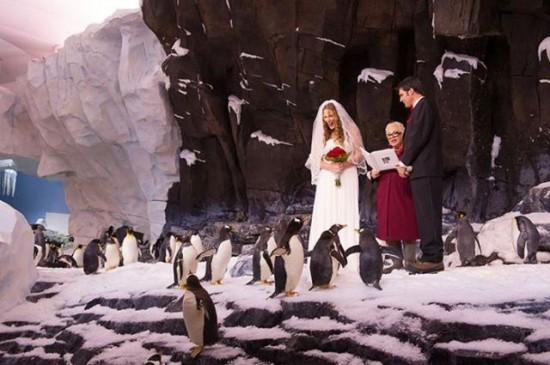 ペンギンに囲まれて結婚式をあげるカップル