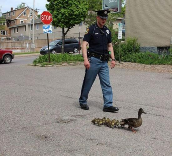 鴨の親子を見つめる警官